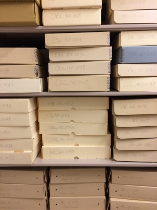 Just a few of the boxes sorted by SBMAL volunteer Jenna Jordan. Br. Jeff will analyze and add these to the finding guide.